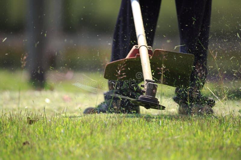 Trädgårdsmästareklippgräset vid gräsklipparen royaltyfri foto