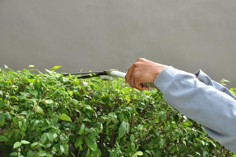 Trädgårdsmästareklipphäck med grässax arkivfoto