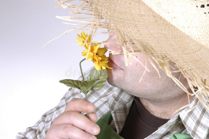 Download Trädgårdsmästarelukter arkivfoto. Bild av person, solros - 283882