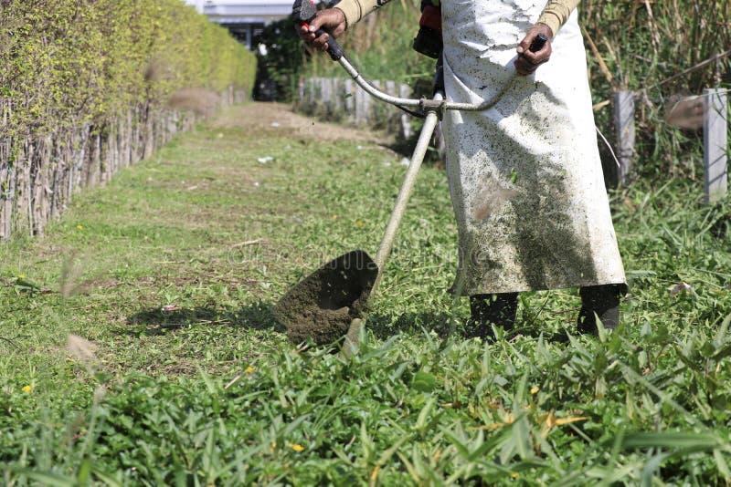 Trädgårdsmästaren använder gräsklipparen för att förkorta gräset Trädgårdsmästarebruksgräsklippare för klar trädgård royaltyfri foto