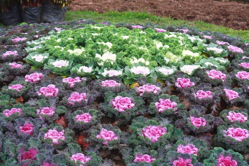 Trädgårdsnäring royaltyfri bild