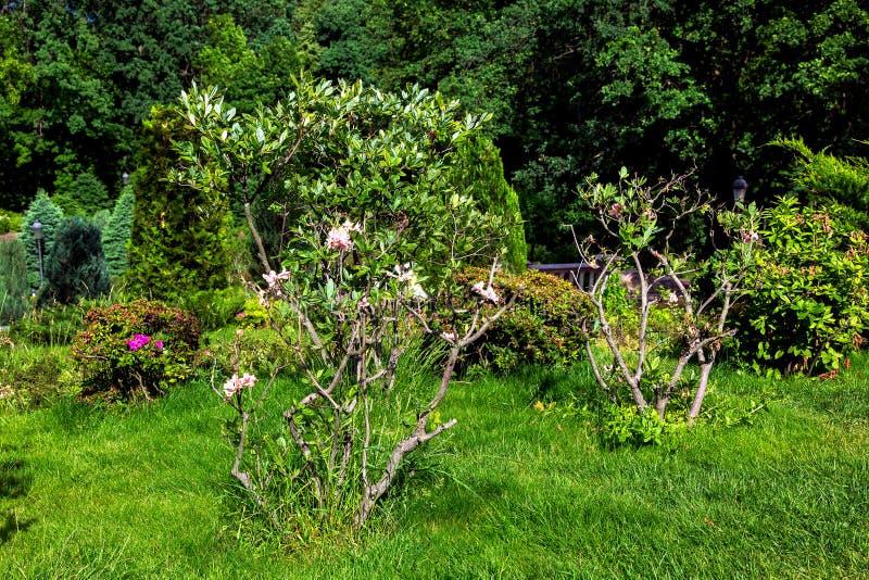 Trädgårdträdgård med gröna växter och blommabuskar fotografering för bildbyråer