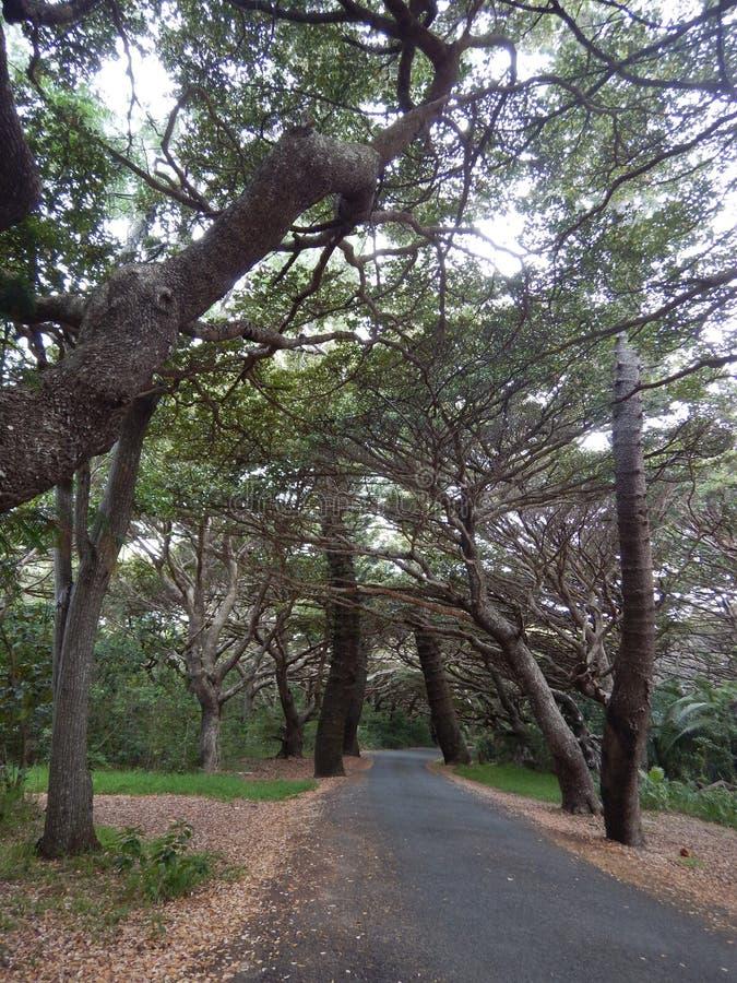 Trädgränd arkivfoto