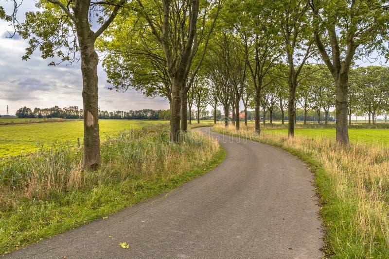 Trädgränd längs en gammal krökt landsväg royaltyfria foton