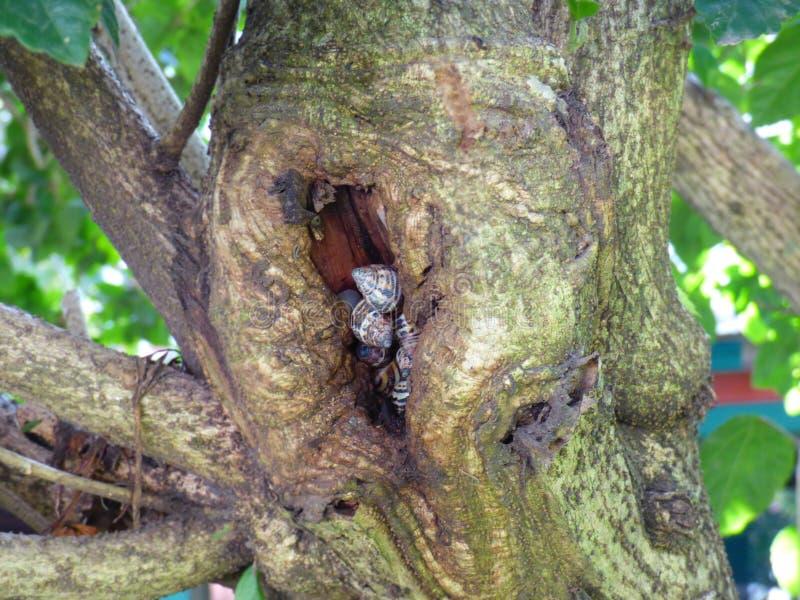 Trädhål mycket av sniglar royaltyfri bild