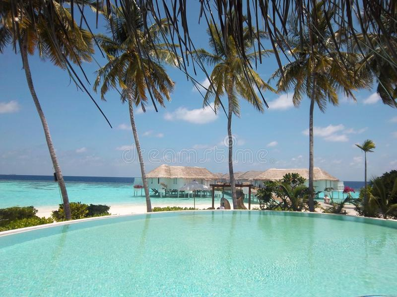 Trädhavssand på den Maldiverna ön royaltyfri foto