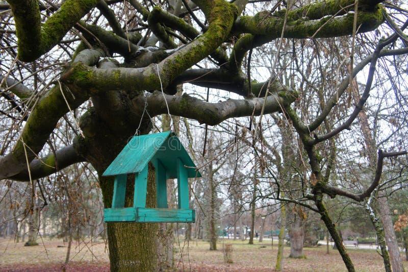 trädhus för fåglarna, gladlynta apartmen royaltyfria bilder