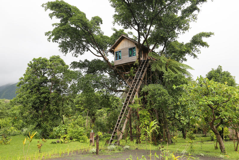 Trädhus, Vanuatu royaltyfria bilder