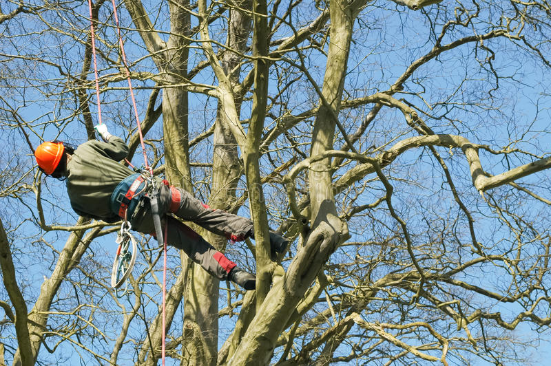 Trädklättring royaltyfri foto