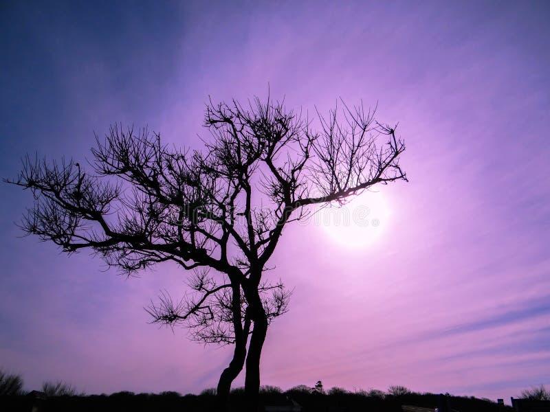 Trädkontur mot purpurfärgad himmel royaltyfri foto