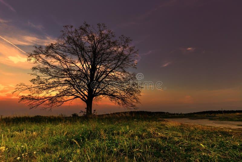 Trädkontur och en färgrik solnedgång royaltyfri foto