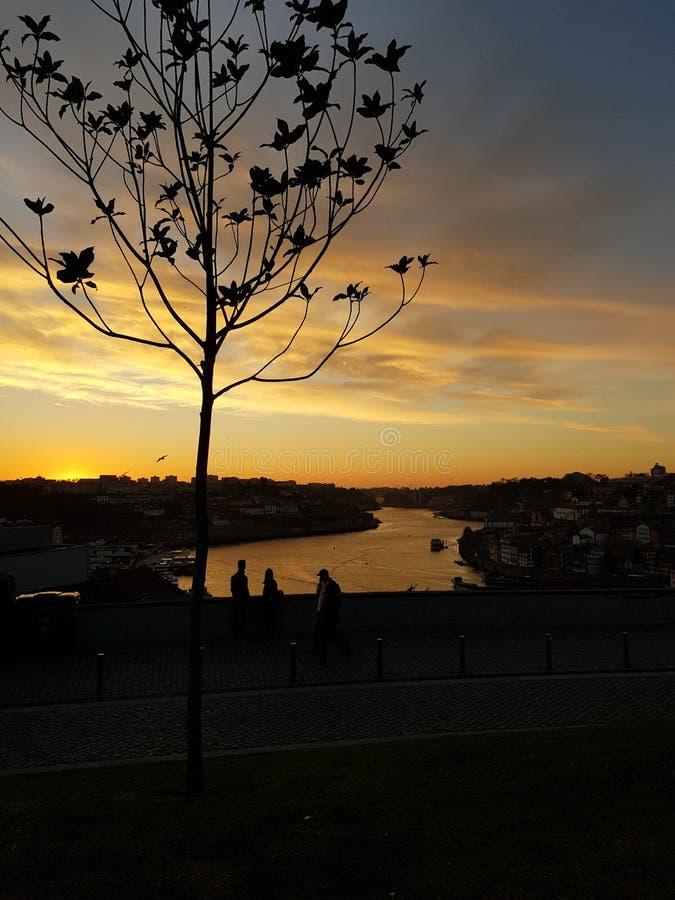 Trädkontur och solnedgång arkivbild