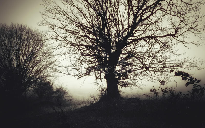 Trädkontur på allhelgonaaftonnatt fotografering för bildbyråer