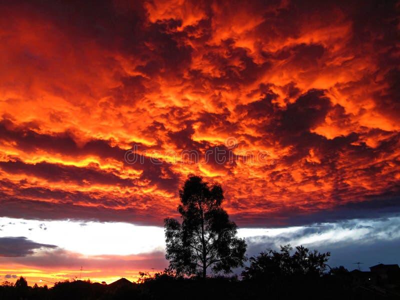 Trädkontur vid brännhet röd fördunklad himmel royaltyfria foton