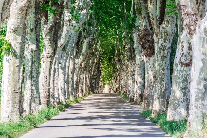 Trädlinje och typisk väg i Provence mellan man och Manosque royaltyfria foton