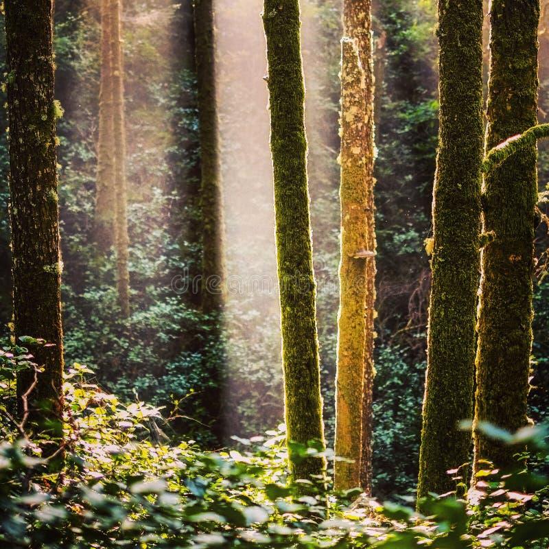 Trädljus fotografering för bildbyråer