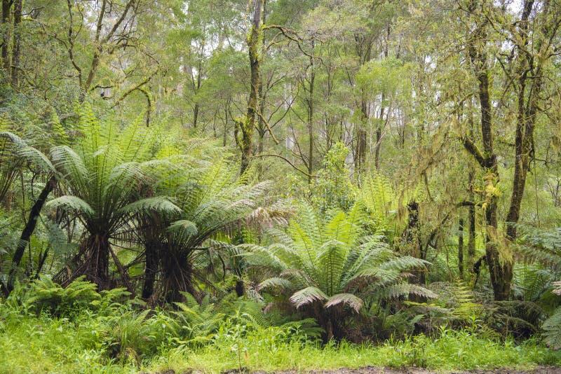 Trädormbunkar i rainforest royaltyfri bild