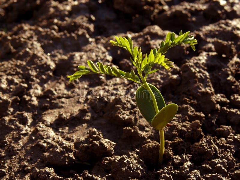 Trädplanta royaltyfri foto