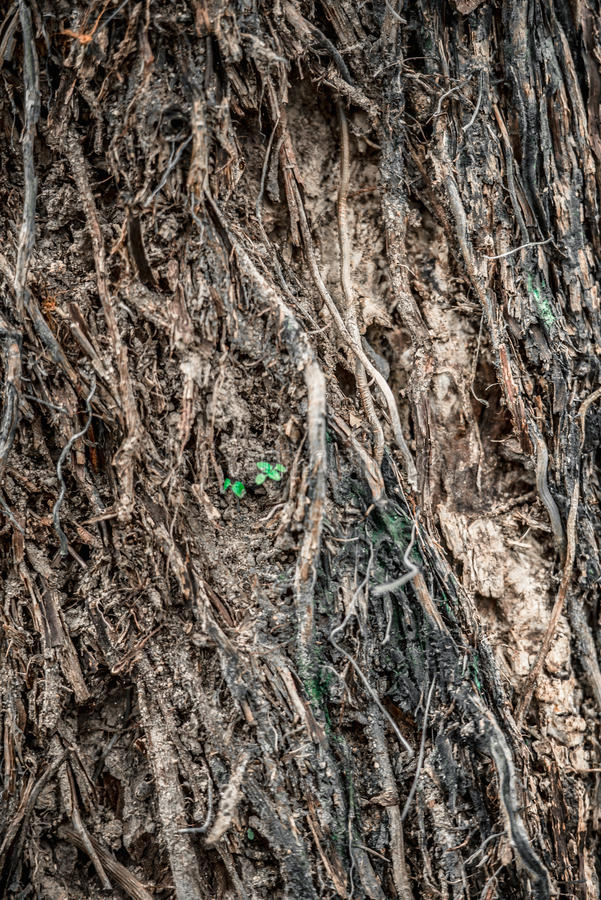 Trädplantor royaltyfri foto