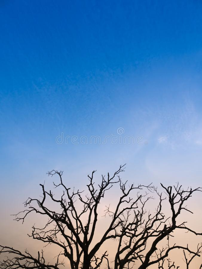 Trädsidor faller ut tidigt i dagen och startar vintern arkivfoto