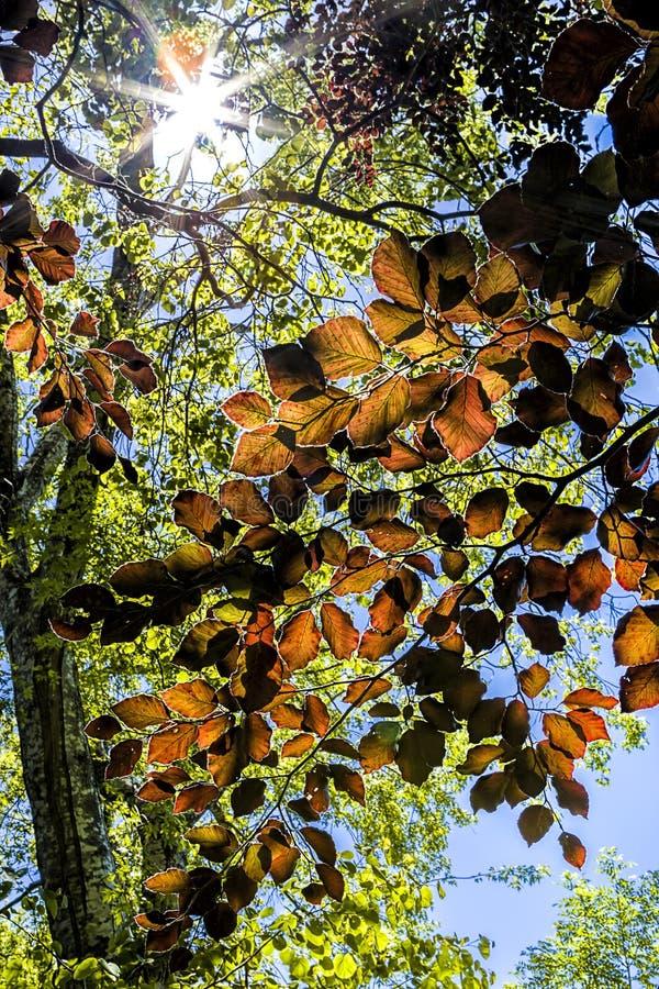 Trädsidor lät solen skina igenom arkivfoto