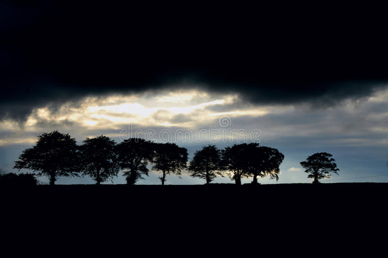 Trädsilouhettes royaltyfri fotografi