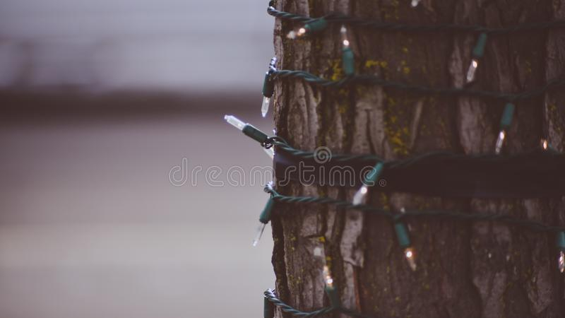 Trädsjal i julljus på gatan av Coeur D ` Alene Idaho som får klar för julande royaltyfri bild