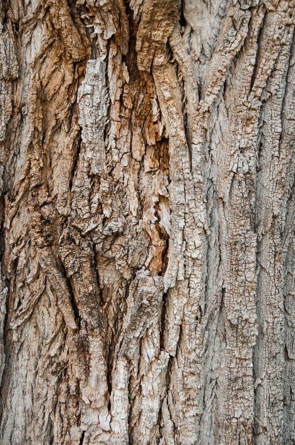 Trädskäll, detalj av textur arkivfoton