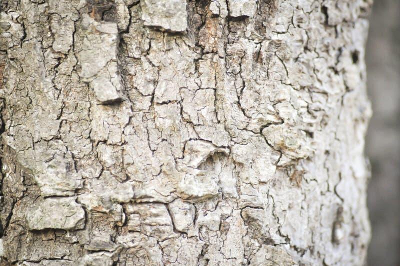 Trädskäll i suddighetsbakgrund royaltyfri fotografi