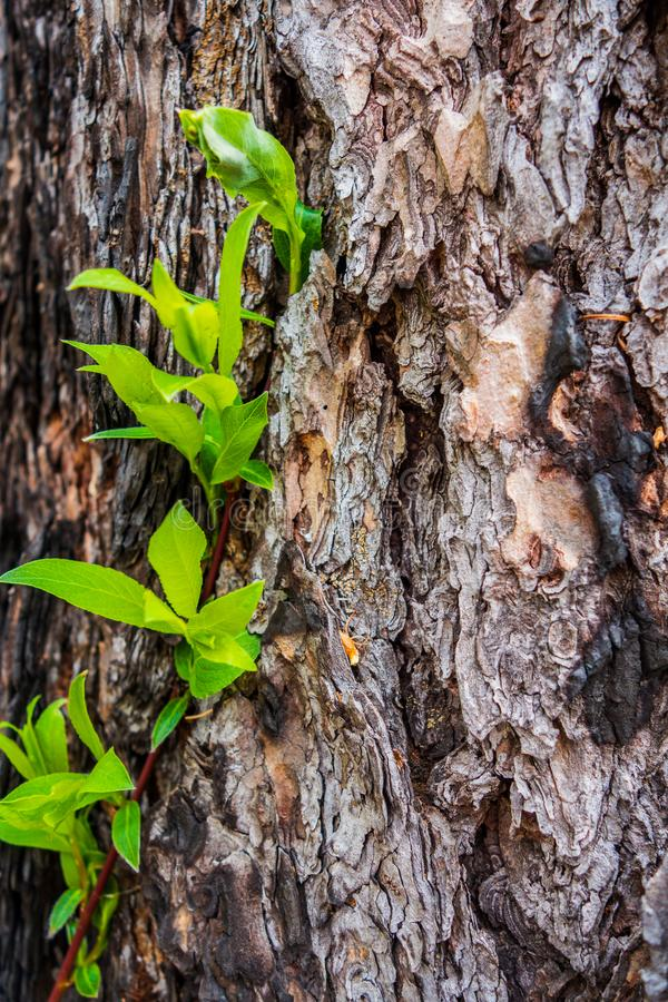 Trädskäll med gröna sidor arkivbilder