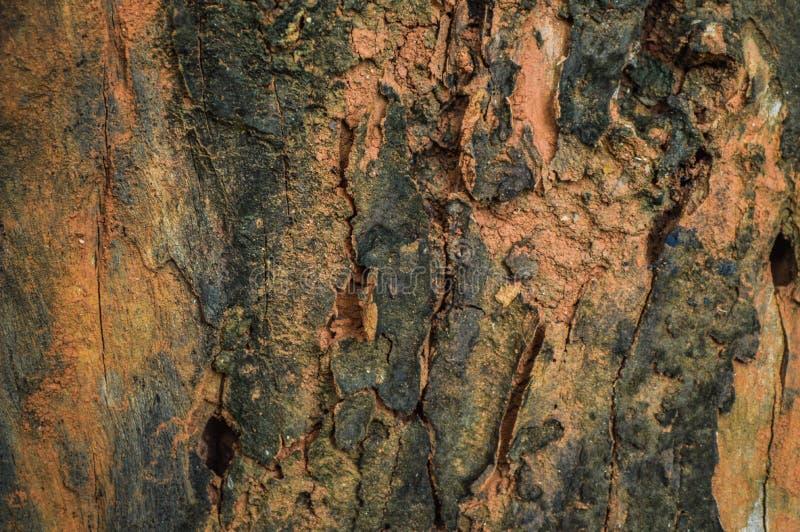 Trädskäll med lavtextur royaltyfri fotografi