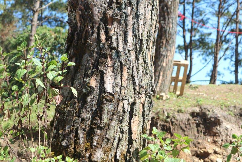 Trädskället eller sörjer trädet royaltyfri foto