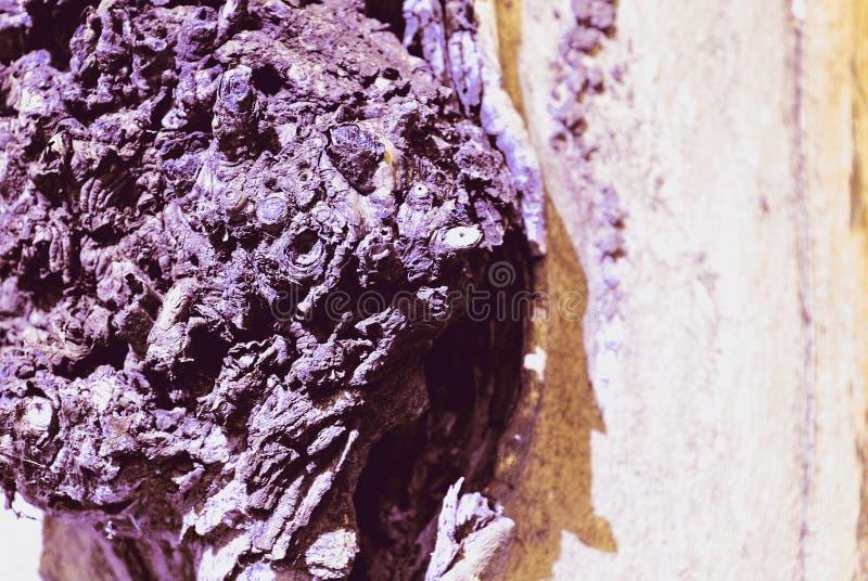 Trädskället knäckte upp den gamla purpurfärgade stammen, horisontalbakgrundstexturslut royaltyfria bilder