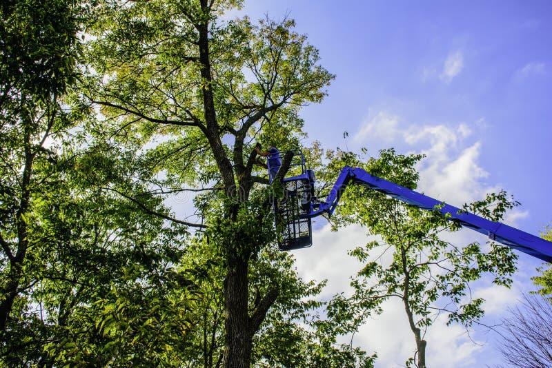 Trädskärare arkivfoton