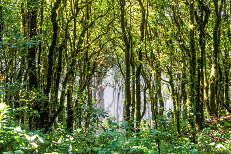 Trädskog i höstsäsong av Thailand royaltyfri fotografi