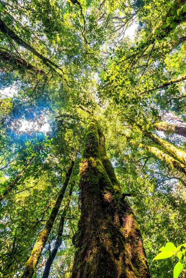 Trädskog i höstsäsong av Thailand arkivbild
