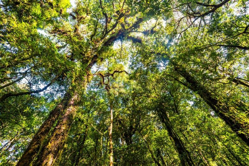 Trädskog i höstsäsong av Thailand royaltyfri foto