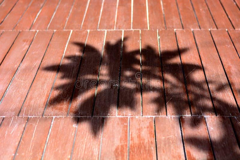 Trädskugga på det wood golvet royaltyfri foto