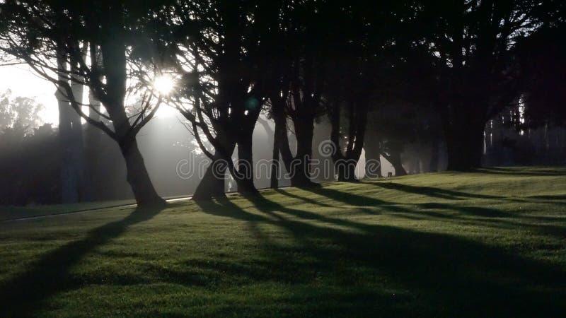 Trädsol arkivfoton
