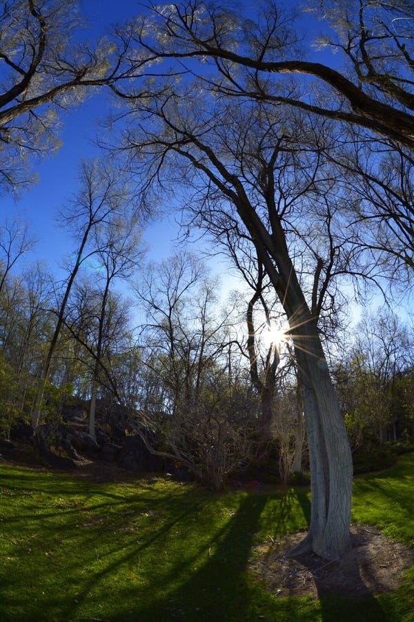 Trädsolljusskuggor parkerar grönt gräs royaltyfri foto