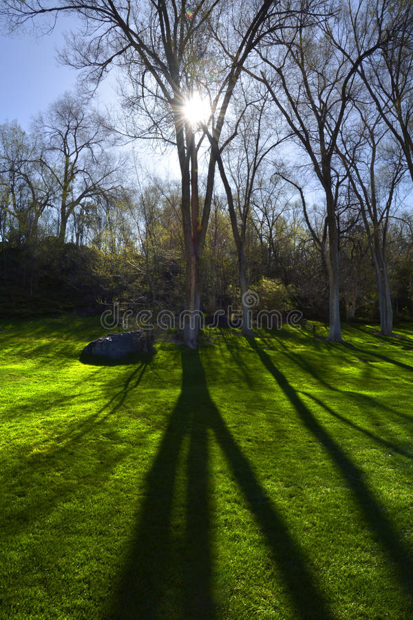 Trädsolljusskuggor parkerar grönt gräs arkivfoto