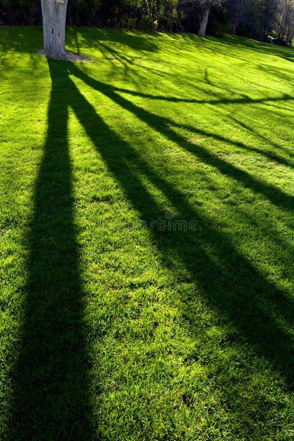 Trädsolljusskuggor parkerar grönt gräs royaltyfri fotografi