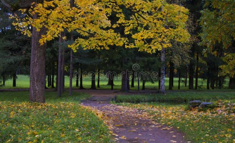 Trädsparven arkivfoton