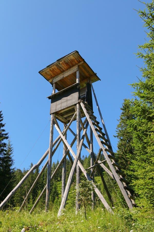 Trädställningen eller hjortar står på berget för jägare arkivfoto