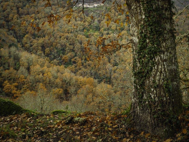 Trädstam i skogen arkivfoton