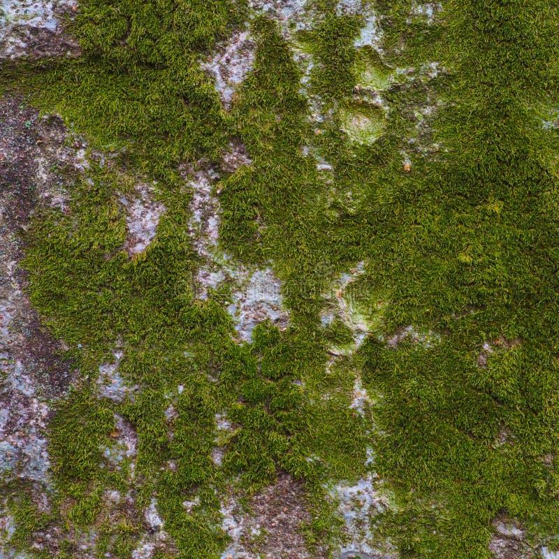 Trädstam som täckas i ljust - grön mossa arkivfoto