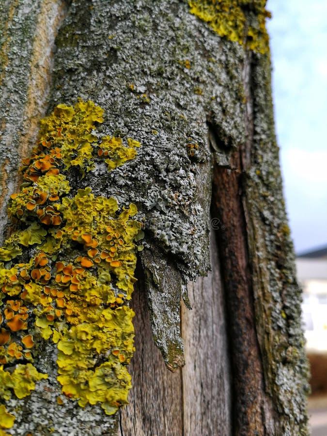 Trädstam som täckas med gul mossa royaltyfri foto
