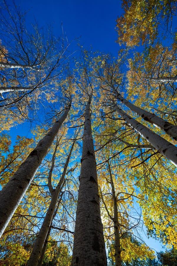 Trädstammar arkivbilder