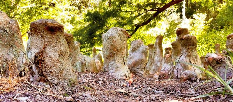 Trädstammar i skog royaltyfri fotografi