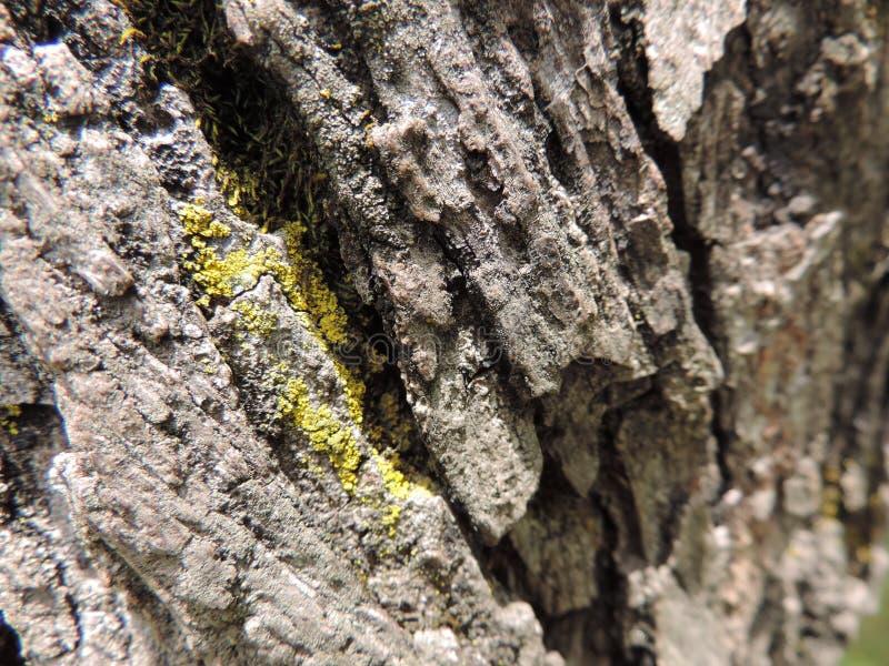 Trädstammen arkivbild
